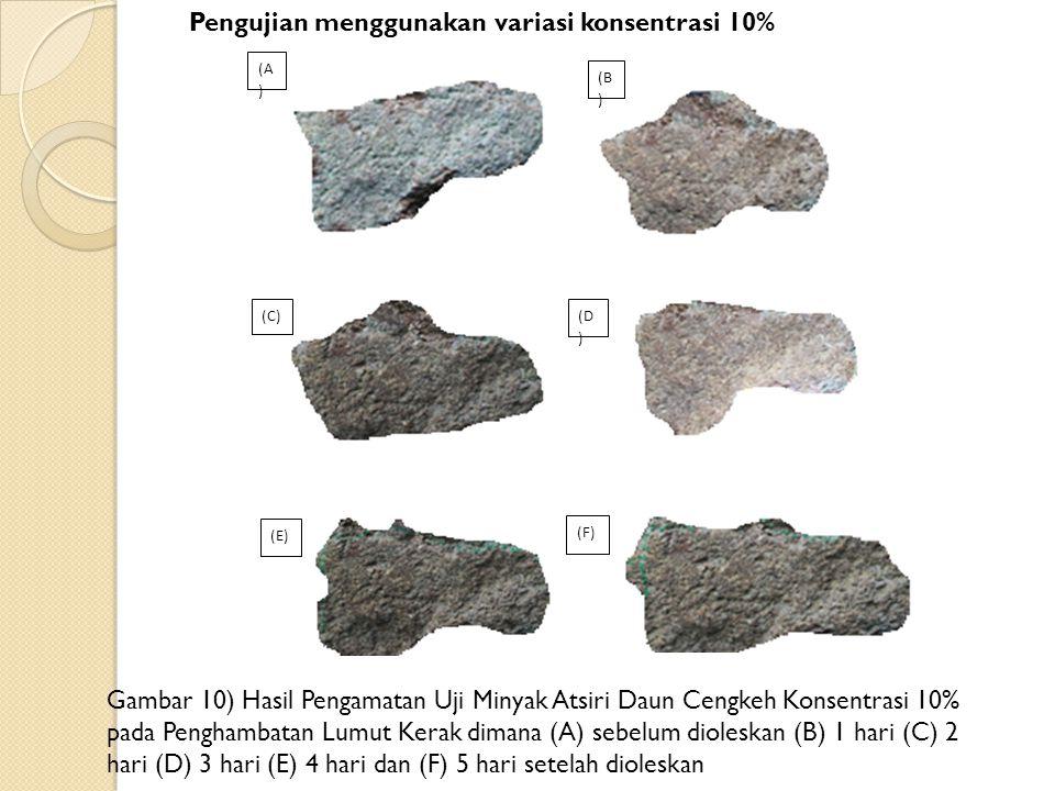 Pengujian menggunakan variasi konsentrasi 10% Gambar 10) Hasil Pengamatan Uji Minyak Atsiri Daun Cengkeh Konsentrasi 10% pada Penghambatan Lumut Kerak