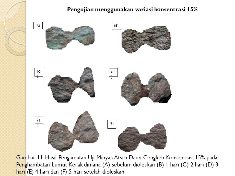 Pengujian menggunakan variasi konsentrasi 15% Gambar 11. Hasil Pengamatan Uji Minyak Atsiri Daun Cengkeh Konsentrasi 15% pada Penghambatan Lumut Kerak
