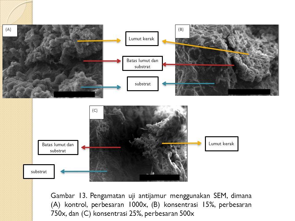 Gambar 13. Pengamatan uji antijamur menggunakan SEM, dimana (A) kontrol, perbesaran 1000x, (B) konsentrasi 15%, perbesaran 750x, dan (C) konsentrasi 2
