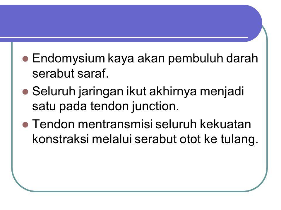 Endomysium kaya akan pembuluh darah serabut saraf. Seluruh jaringan ikut akhirnya menjadi satu pada tendon junction. Tendon mentransmisi seluruh kekua
