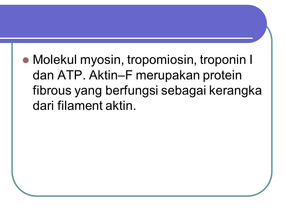 Molekul myosin, tropomiosin, troponin I dan ATP. Aktin–F merupakan protein fibrous yang berfungsi sebagai kerangka dari filament aktin.