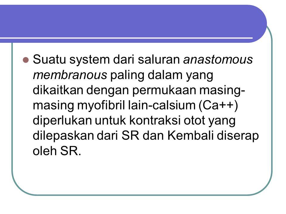 Suatu system dari saluran anastomous membranous paling dalam yang dikaitkan dengan permukaan masing- masing myofibril lain-calsium (Ca++) diperlukan u