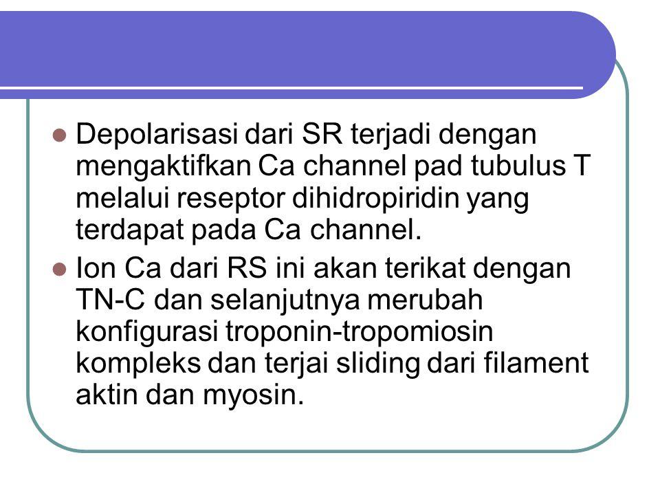Depolarisasi dari SR terjadi dengan mengaktifkan Ca channel pad tubulus T melalui reseptor dihidropiridin yang terdapat pada Ca channel. Ion Ca dari R
