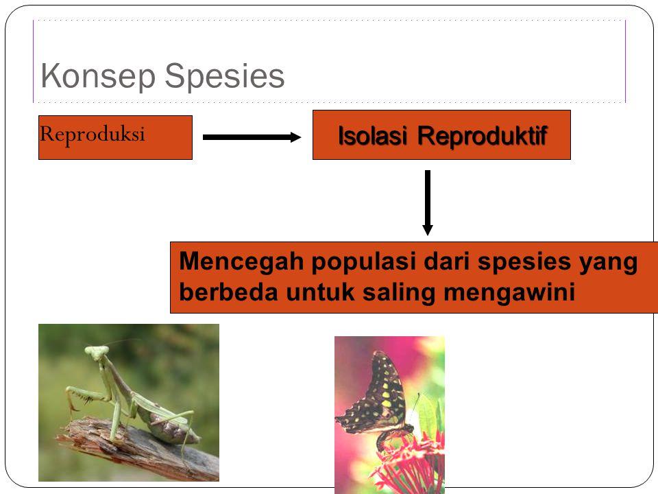 Isolasi Reproduktif Konsep Spesies Reproduksi Mencegah populasi dari spesies yang berbeda untuk saling mengawini