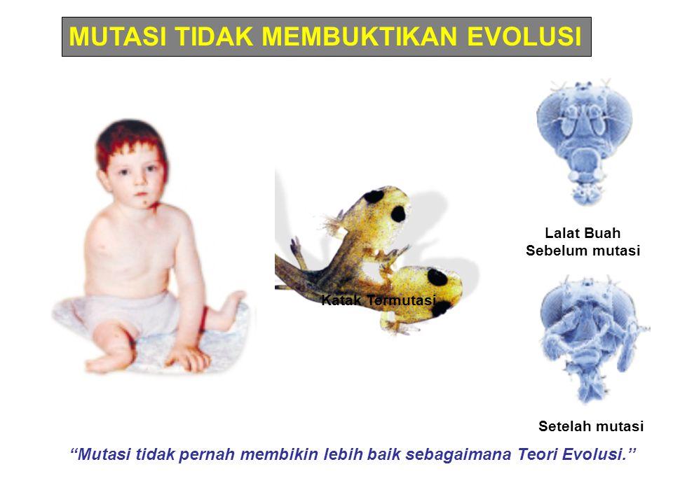 """""""Mutasi tidak pernah membikin lebih baik sebagaimana Teori Evolusi.'' MUTASI TIDAK MEMBUKTIKAN EVOLUSI Setelah mutasi Lalat Buah Sebelum mutasi Katak"""