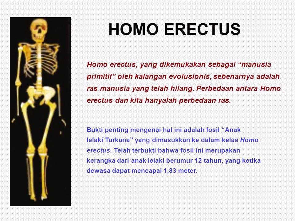 """HOMO ERECTUS Homo erectus, yang dikemukakan sebagai """"manusia primitif"""" oleh kalangan evolusionis, sebenarnya adalah ras manusia yang telah hilang. Per"""