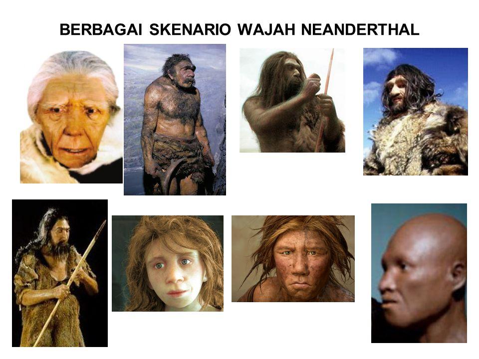 BERBAGAI SKENARIO WAJAH NEANDERTHAL