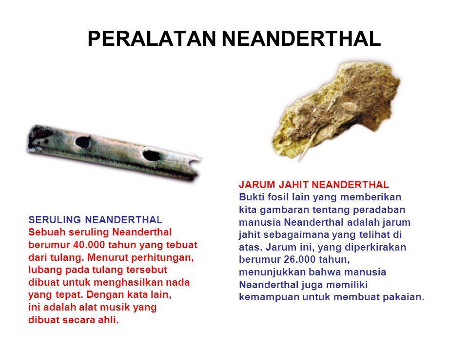 PERALATAN NEANDERTHAL SERULING NEANDERTHAL Sebuah seruling Neanderthal berumur 40.000 tahun yang tebuat dari tulang. Menurut perhitungan, lubang pada