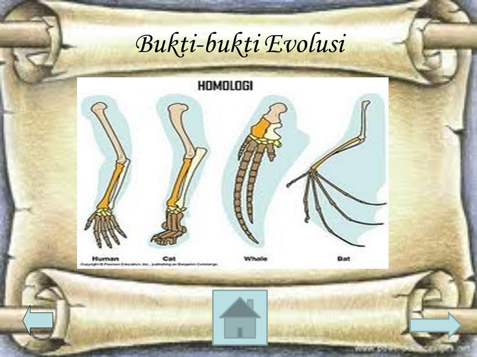 Bukti-bukti Evolusi