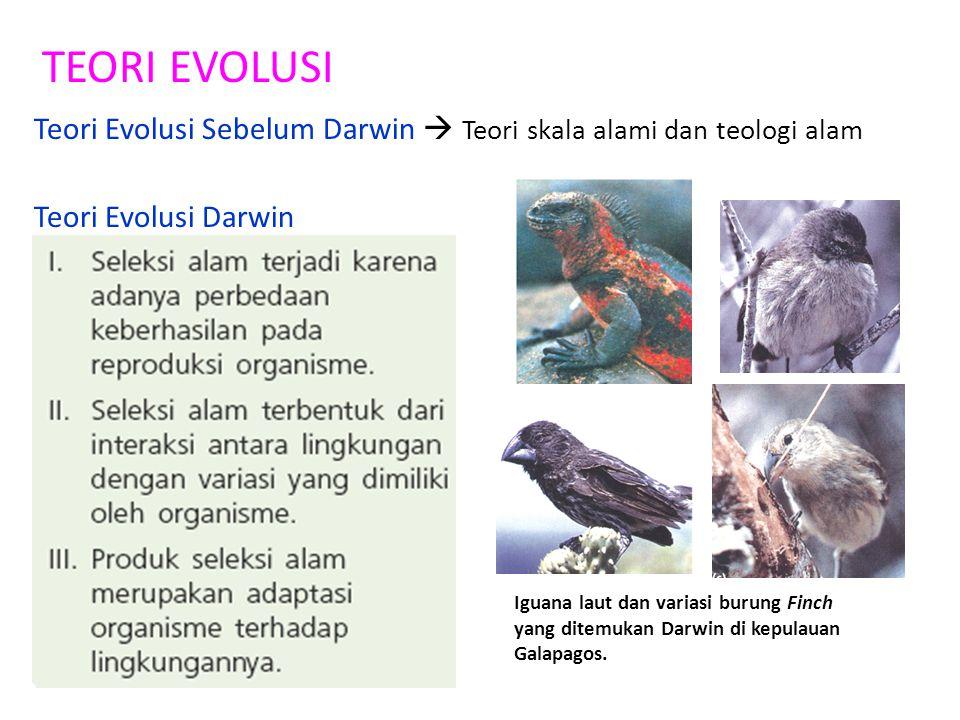 TEORI EVOLUSI Teori Evolusi Sebelum Darwin  Teori skala alami dan teologi alam Teori Evolusi Darwin Iguana laut dan variasi burung Finch yang ditemuk