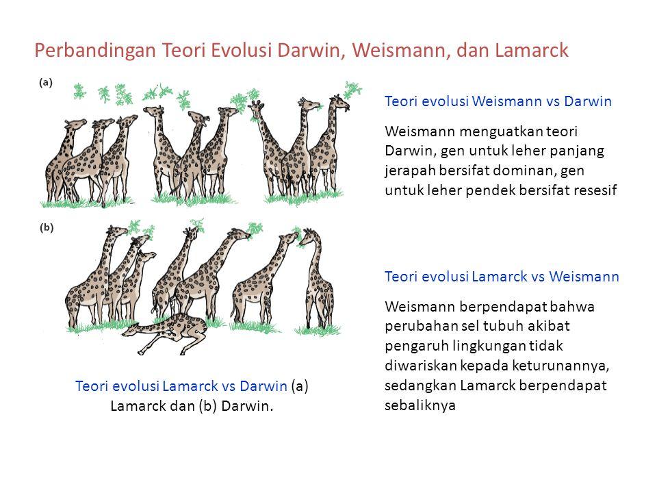 Perbandingan Teori Evolusi Darwin, Weismann, dan Lamarck Teori evolusi Lamarck vs Darwin (a) Lamarck dan (b) Darwin. Teori evolusi Weismann vs Darwin