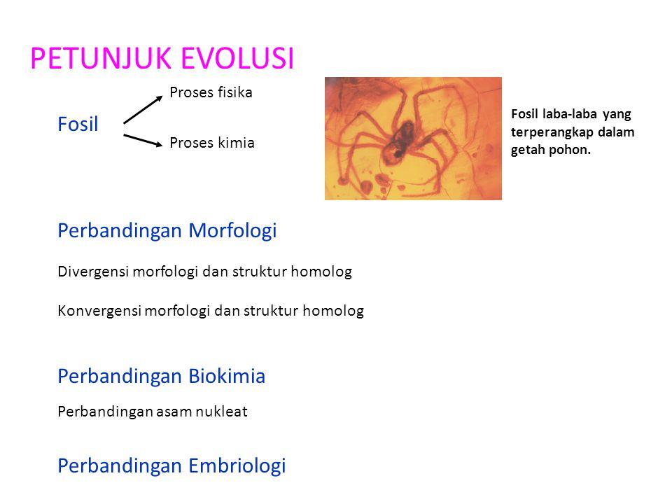 PETUNJUK EVOLUSI Fosil Proses fisika Proses kimia Perbandingan Morfologi Divergensi morfologi dan struktur homolog Konvergensi morfologi dan struktur