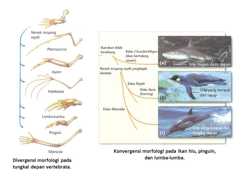 Divergensi morfologi pada tungkai depan vertebrata. Konvergensi morfologi pada ikan hiu, pinguin, dan lumba-lumba.