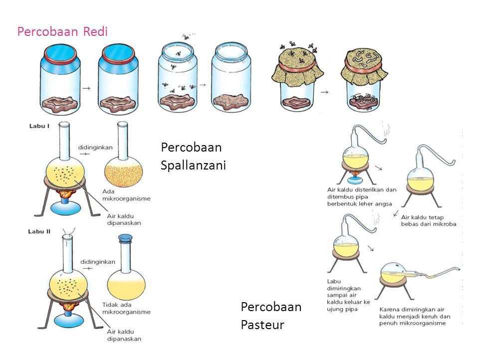 Percobaan Redi Percobaan Spallanzani Percobaan Pasteur