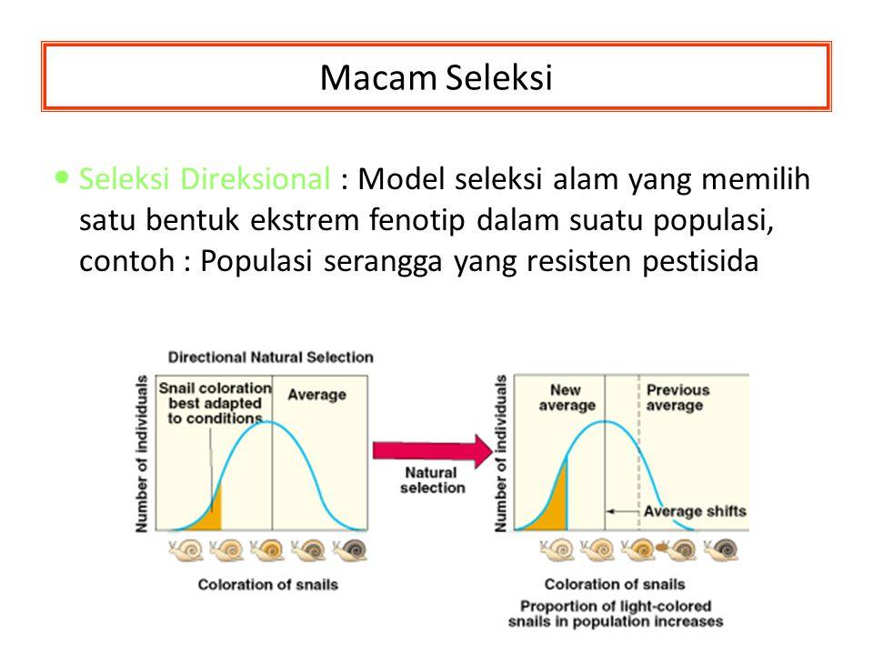 Macam Seleksi Seleksi Direksional Seleksi Direksional : Model seleksi alam yang memilih satu bentuk ekstrem fenotip dalam suatu populasi, contoh : Pop
