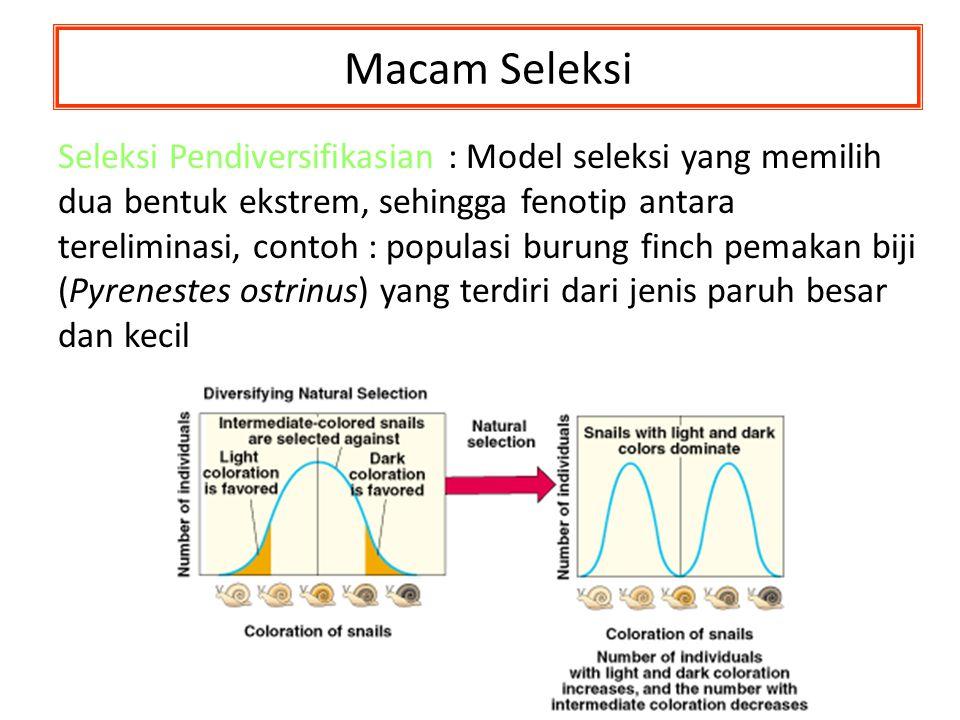 Macam Seleksi Seleksi Pendiversifikasian Seleksi Pendiversifikasian : Model seleksi yang memilih dua bentuk ekstrem, sehingga fenotip antara terelimin