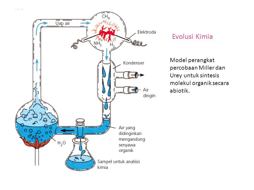 Model perangkat percobaan Miller dan Urey untuk sintesis molekul organik secara abiotik. Evolusi Kimia