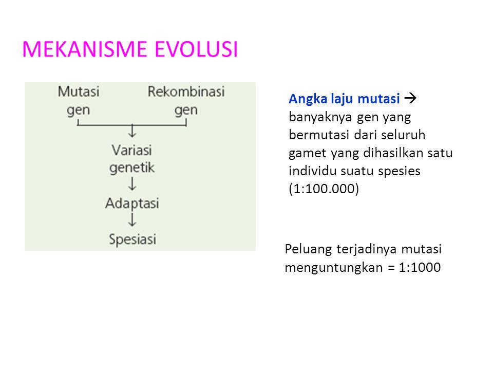 MEKANISME EVOLUSI Angka laju mutasi  banyaknya gen yang bermutasi dari seluruh gamet yang dihasilkan satu individu suatu spesies (1:100.000) Peluang