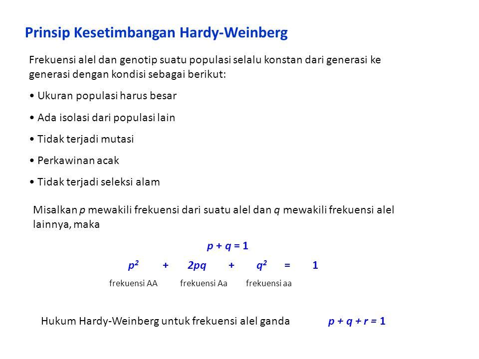 Prinsip Kesetimbangan Hardy-Weinberg Frekuensi alel dan genotip suatu populasi selalu konstan dari generasi ke generasi dengan kondisi sebagai berikut