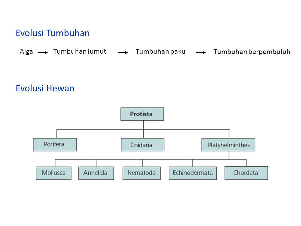 Evolusi Tumbuhan AlgaTumbuhan lumutTumbuhan paku Tumbuhan berpembuluh Evolusi Hewan