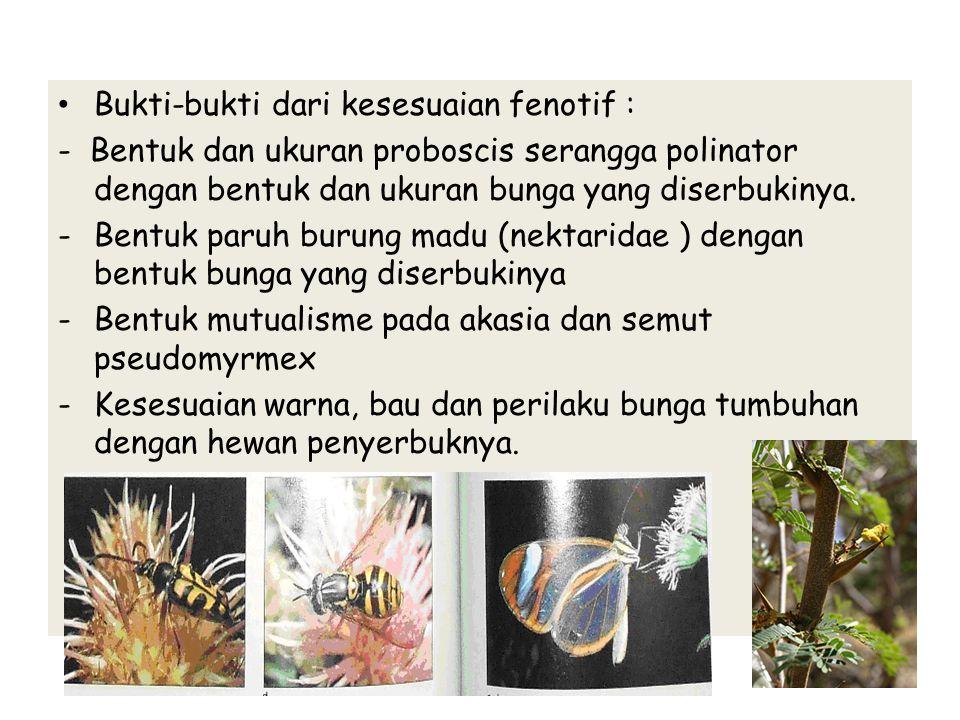 Bukti-bukti dari kesesuaian fenotif : - Bentuk dan ukuran proboscis serangga polinator dengan bentuk dan ukuran bunga yang diserbukinya. -Bentuk paruh
