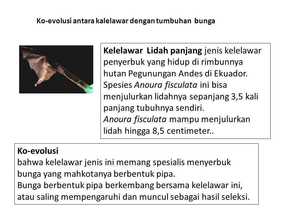 Kelelawar Lidah panjang jenis kelelawar penyerbuk yang hidup di rimbunnya hutan Pegunungan Andes di Ekuador. Spesies Anoura fisculata ini bisa menjulu