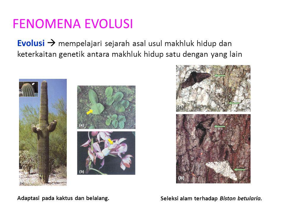 FENOMENA EVOLUSI Evolusi  mempelajari sejarah asal usul makhluk hidup dan keterkaitan genetik antara makhluk hidup satu dengan yang lain Adaptasi pad