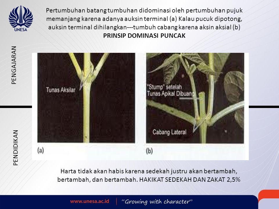 Pertumbuhan batang tumbuhan didominasi oleh pertumbuhan pujuk memanjang karena adanya auksin terminal (a) Kalau pucuk dipotong, auksin terminal dihilangkan---tumbuh cabang karena aksin aksial (b) PRINSIP DOMINASI PUNCAK Harta tidak akan habis karena sedekah justru akan bertambah, bertambah, dan bertambah.