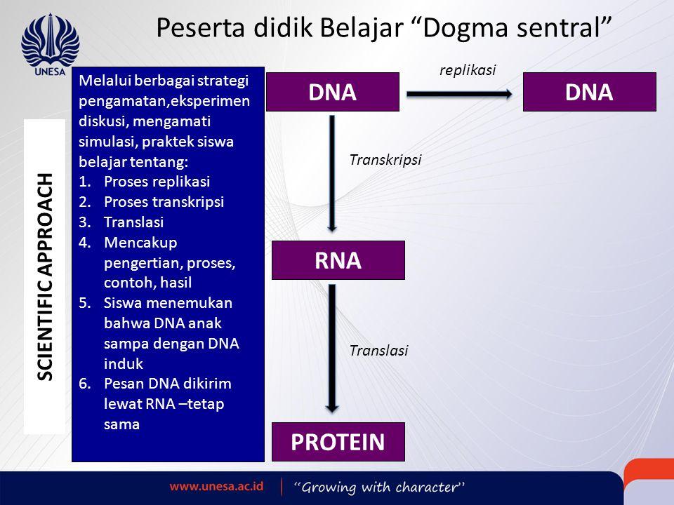 Peserta didik Belajar Dogma sentral DNA RNA PROTEIN SCIENTIFIC APPROACH Melalui berbagai strategi pengamatan,eksperimen diskusi, mengamati simulasi, praktek siswa belajar tentang: 1.Proses replikasi 2.Proses transkripsi 3.Translasi 4.Mencakup pengertian, proses, contoh, hasil 5.Siswa menemukan bahwa DNA anak sampa dengan DNA induk 6.Pesan DNA dikirim lewat RNA –tetap sama replikasi Transkripsi Translasi