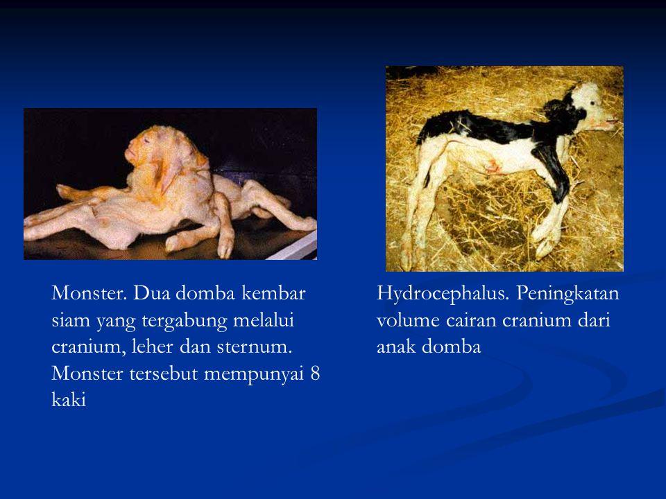 Monster. Dua domba kembar siam yang tergabung melalui cranium, leher dan sternum. Monster tersebut mempunyai 8 kaki Hydrocephalus. Peningkatan volume