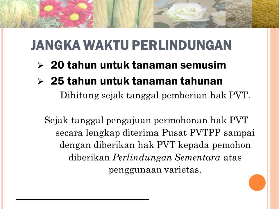 JANGKA WAKTU PERLINDUNGAN  20 tahun untuk tanaman semusim  25 tahun untuk tanaman tahunan Dihitung sejak tanggal pemberian hak PVT.
