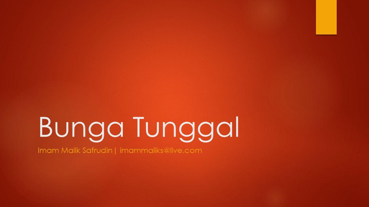 Bunga Tunggal Imam Malik Safrudin| imammaliks@live.com