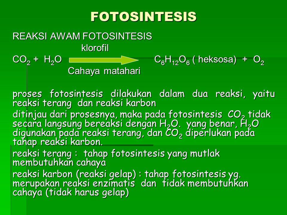 FOTOSINTESIS REAKSI AWAM FOTOSINTESIS klorofil klorofil CO 2 + H 2 O C 6 H 12 O 6 ( heksosa) + O 2 Cahaya matahari Cahaya matahari proses fotosintesis