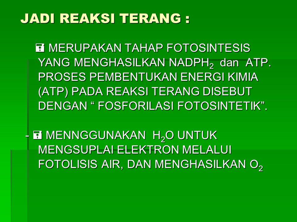JADI REAKSI TERANG :  MERUPAKAN TAHAP FOTOSINTESIS YANG MENGHASILKAN NADPH 2 dan ATP. PROSES PEMBENTUKAN ENERGI KIMIA (ATP) PADA REAKSI TERANG DISEBU