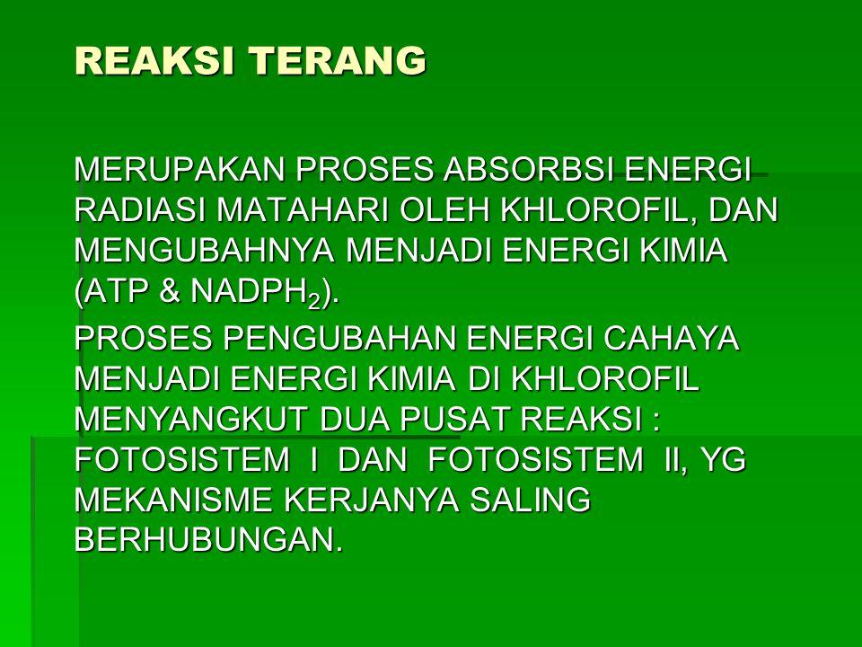 REAKSI TERANG MERUPAKAN PROSES ABSORBSI ENERGI RADIASI MATAHARI OLEH KHLOROFIL, DAN MENGUBAHNYA MENJADI ENERGI KIMIA (ATP & NADPH 2 ). PROSES PENGUBAH