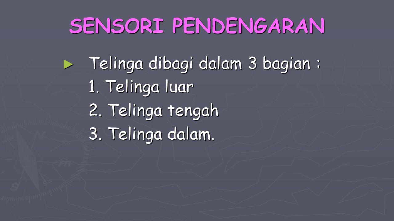 SENSORI PENDENGARAN ► Telinga dibagi dalam 3 bagian : 1. Telinga luar 2. Telinga tengah 3. Telinga dalam.
