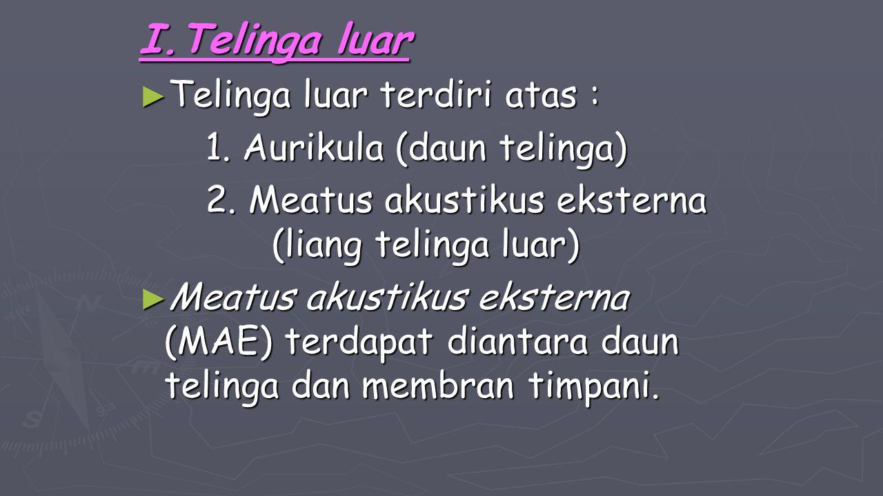 I.Telinga luar ► Telinga luar terdiri atas : 1. Aurikula (daun telinga) 2. Meatus akustikus eksterna (liang telinga luar) ► Meatus akustikus eksterna