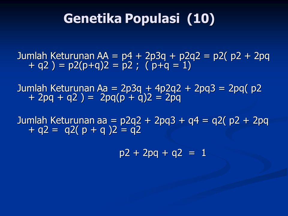 Genetika Populasi (10) Jumlah Keturunan AA = p4 + 2p3q + p2q2 = p2( p2 + 2pq + q2 ) = p2(p+q)2 = p2 ; ( p+q = 1) Jumlah Keturunan Aa = 2p3q + 4p2q2 + 2pq3 = 2pq( p2 + 2pq + q2 ) = 2pq(p + q)2 = 2pq Jumlah Keturunan aa = p2q2 + 2pq3 + q4 = q2( p2 + 2pq + q2 = q2( p + q )2 = q2 p2 + 2pq + q2 = 1 p2 + 2pq + q2 = 1
