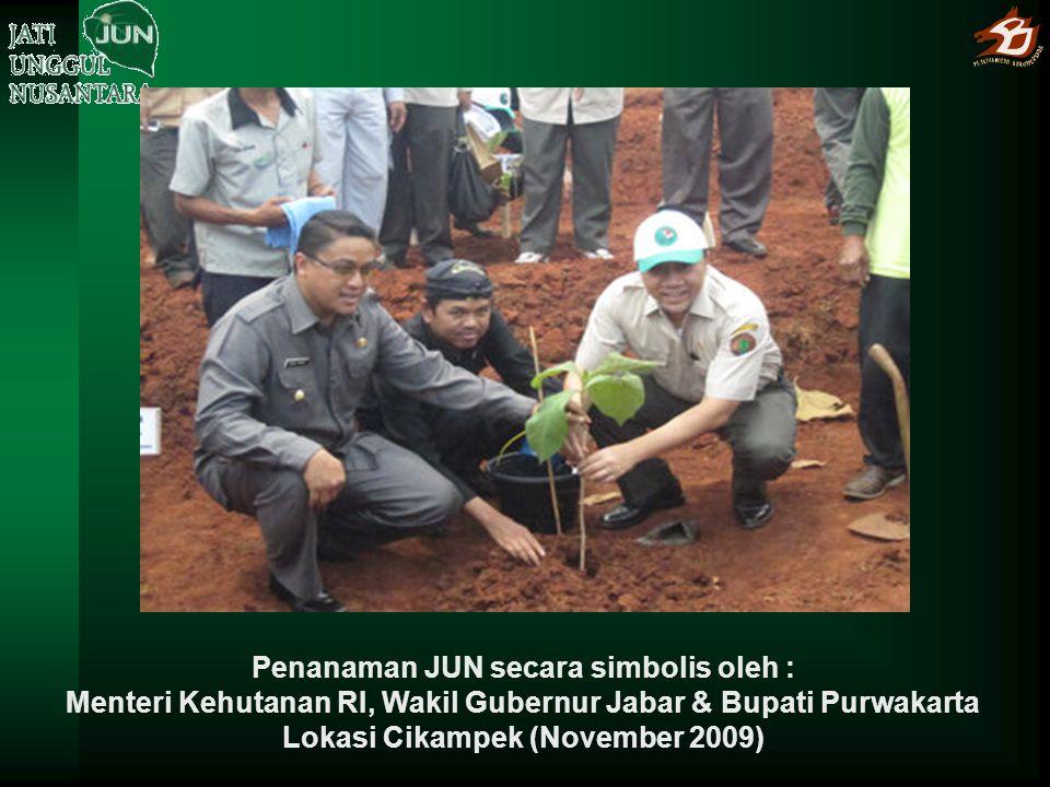 Penanaman JUN secara simbolis oleh : Menteri Kehutanan RI, Wakil Gubernur Jabar & Bupati Purwakarta Lokasi Cikampek (November 2009)