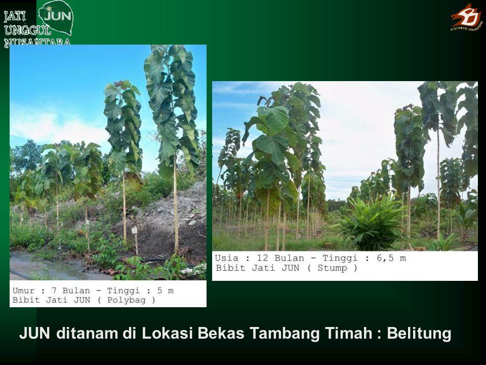 JUN ditanam di Lokasi Bekas Tambang Timah : Belitung