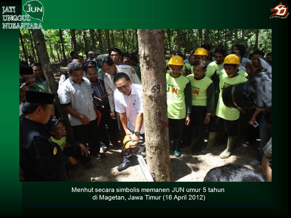 Menhut secara simbolis memanen JUN umur 5 tahun di Magetan, Jawa Timur (16 April 2012)