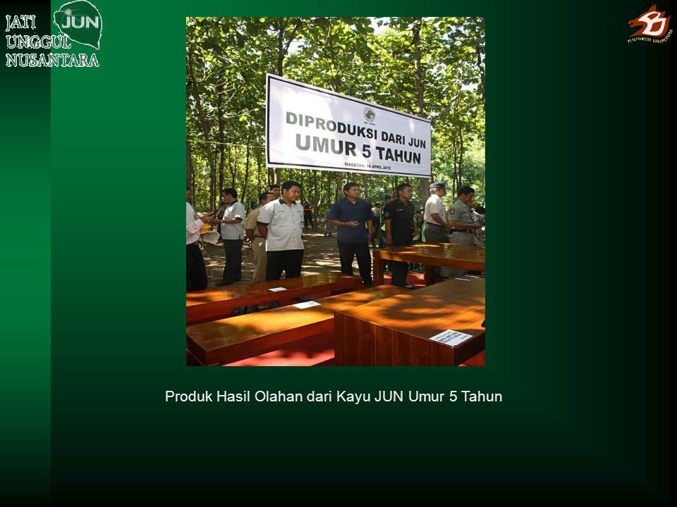 Produk Hasil Olahan dari Kayu JUN Umur 5 Tahun
