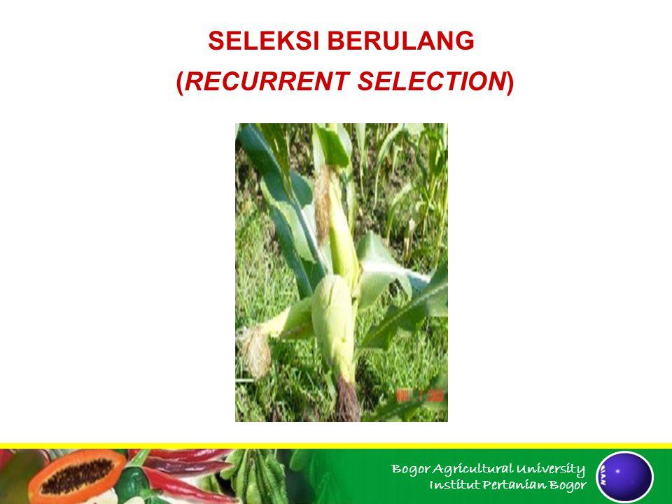 Bogor Agricultural University Institut Pertanian Bogor Sisa benih galur-galur S1 yang dinilai unggul dipergunakan untuk membentuk populasi kawin acak.