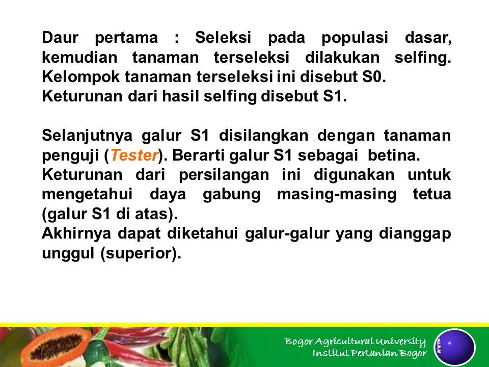 Bogor Agricultural University Institut Pertanian Bogor Daur pertama : Seleksi pada populasi dasar, kemudian tanaman terseleksi dilakukan selfing. Kelo