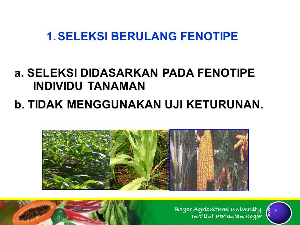 Bogor Agricultural University Institut Pertanian Bogor 1.SELEKSI BERULANG FENOTIPE a. SELEKSI DIDASARKAN PADA FENOTIPE INDIVIDU TANAMAN b. TIDAK MENGG