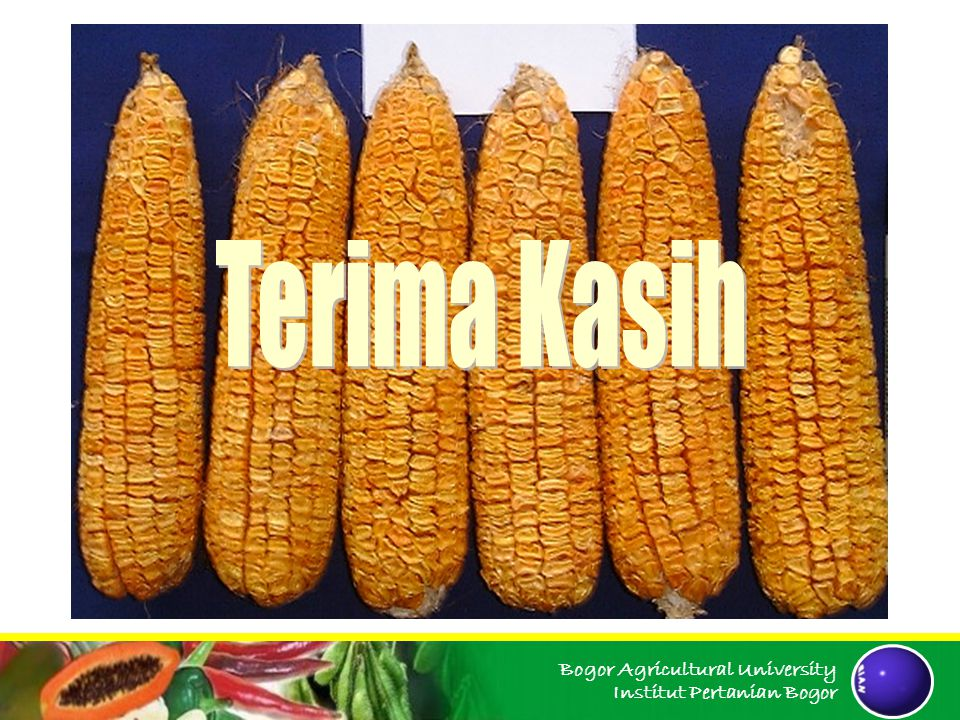 Bogor Agricultural University Institut Pertanian Bogor