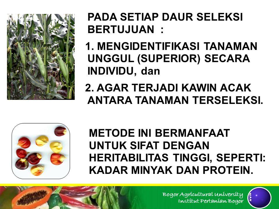Bogor Agricultural University Institut Pertanian Bogor PROSEDUR SELEKSI : 1.MASING-MASING TANAMAN TERSELEKSI DILAKUKAN KAWIN SENDIRI (SELFING) 2.TANAMAN TERSELEKSI DITANAM DALAM BARIS, KEMUDIAN DILAKUKAN SALING- SILANG (INTERCROSS).