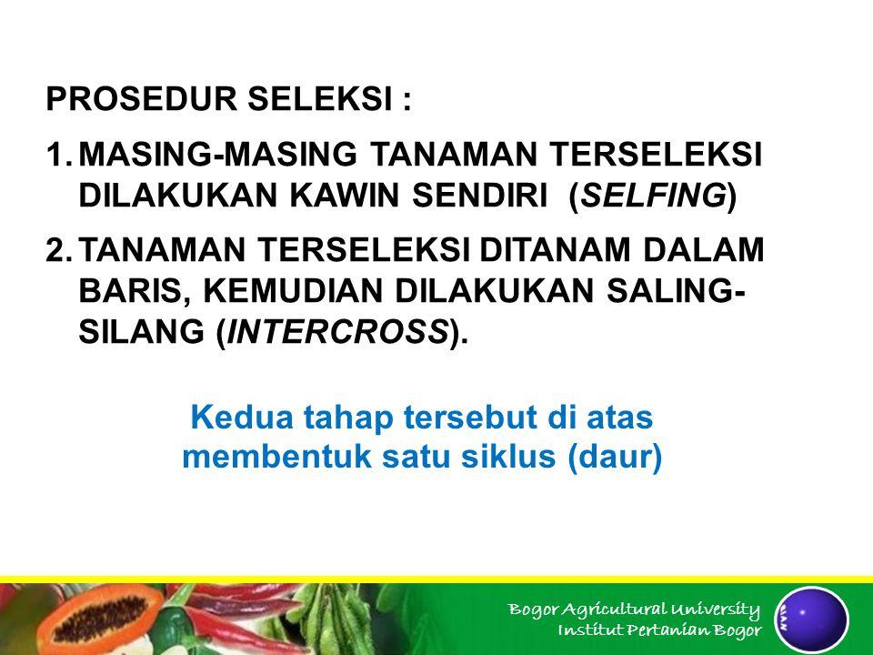 Bogor Agricultural University Institut Pertanian Bogor PROSEDUR SELEKSI : 1.MASING-MASING TANAMAN TERSELEKSI DILAKUKAN KAWIN SENDIRI (SELFING) 2.TANAM