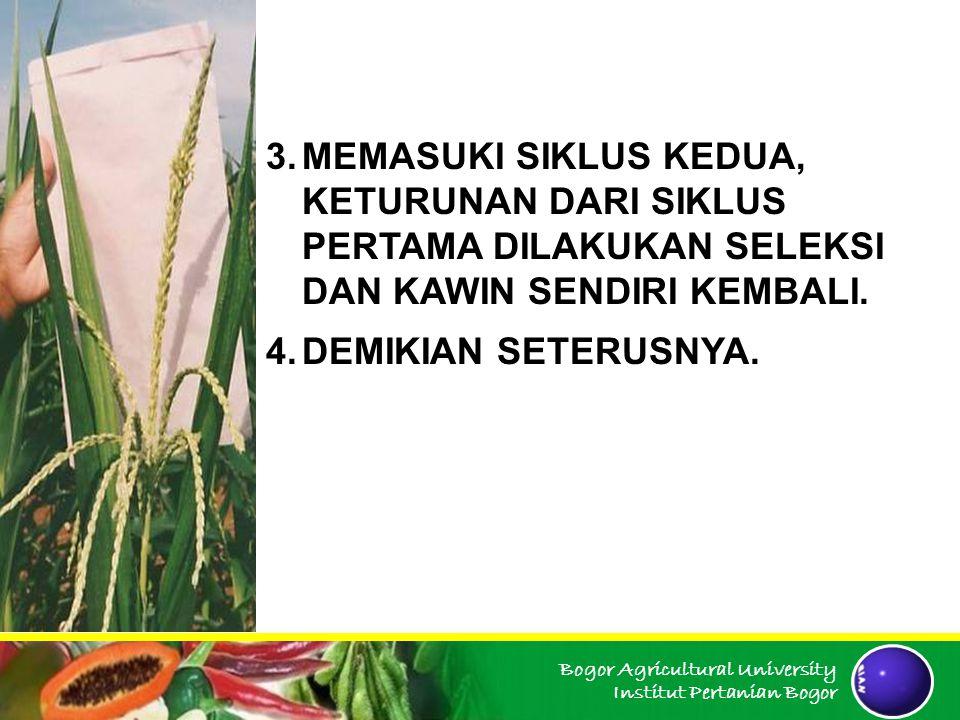 Bogor Agricultural University Institut Pertanian Bogor Ciri program ini adalah terjadinya peningkatan produksi tanaman keturunan dari populasi dengan penguji Program ini bermaksud untuk meningkatkan keturunan melalui uji DGK atau untuk memperoleh suatu populasi yang lebih baik sebagai bahan dalam seleksi galur-galur murni dengan daya gabung khusus tinggi.