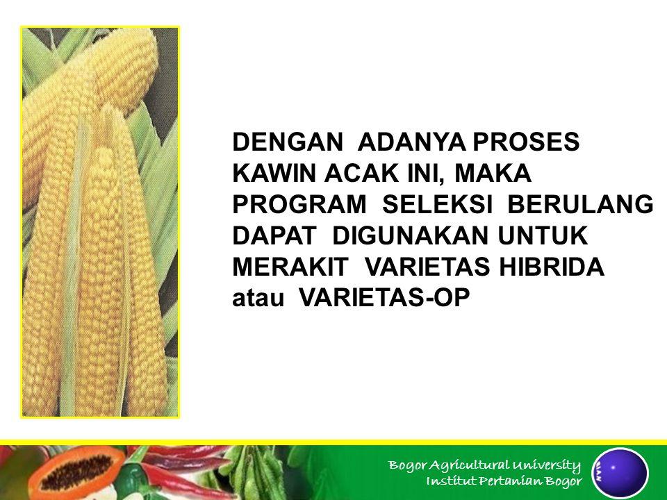 Bogor Agricultural University Institut Pertanian Bogor dst Seleksi dan selfing Saling silang Seleksi dan selfing Saling silang Seleksi Massa Daur 0 Daur 1